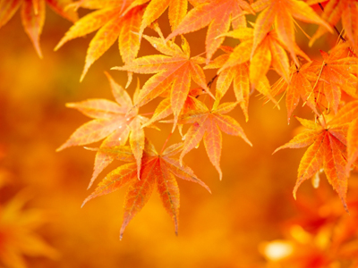 The coming of autumn 〜秋の到来〜
